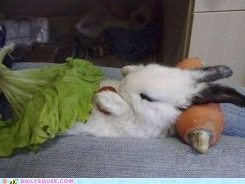 acting like animals bed bedroom best ever Bunday bunny cribs happy bunday napping naps nomming noms rabbit salad salad bar show sleeping - 4782181376