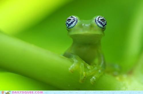 acting like animals awake dream eyes flying monkeys frog lolwut method open perception reality trick waking - 4782316032