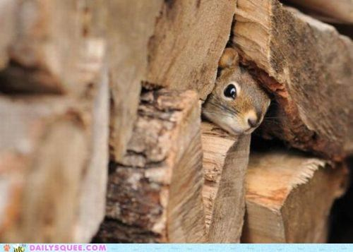 afraid hiding lumber peeking pile safe scared timid wood - 4782400256