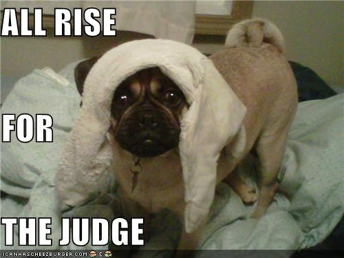 Command,dressed up,judge,pug,rise,towel,wearing,wig