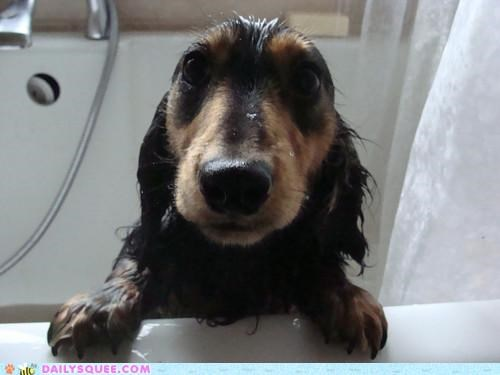 baby,dachshund,guilty,not fair,puppy,puppy eyes,soggy,Staring,the eyes,unfair,wet