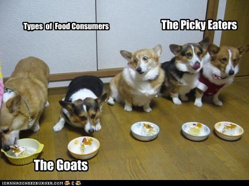 The Picky Eaters The Goats Types of Food Consumers