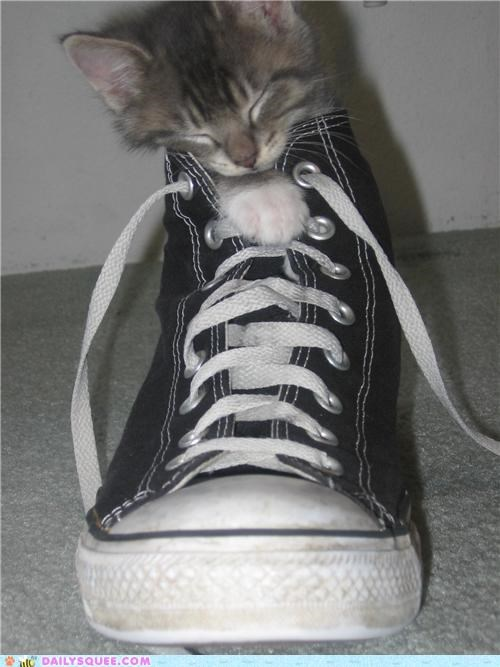 age,cat,chuck taylors,converse,fat,grown up,Hall of Fame,itty bitty,kitten,large,proportion,reader squees,shoe,size,sleeping,time,tiny