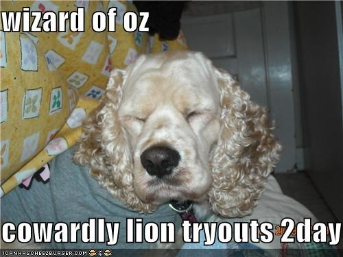 acting cocker spaniel cowardly lion mixed breed ready the wizard of oz today tryouts
