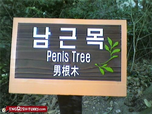 good strong oak,sign,tree