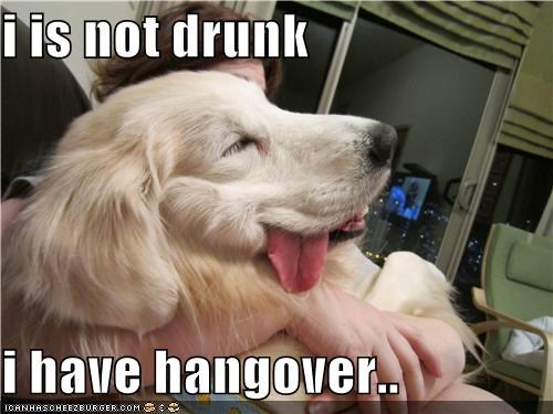 drunk golden retriever hangover have not - 4783606272