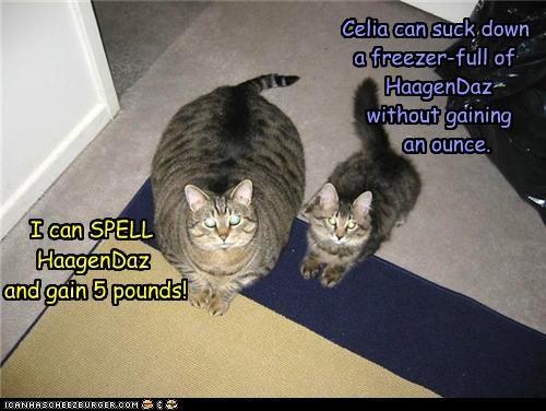 Cheezburger Image 4783856128