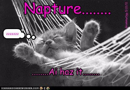 best of the week caption cute Hall of Fame kitten nap nap attack sleeping Zzzzz - 4783952384