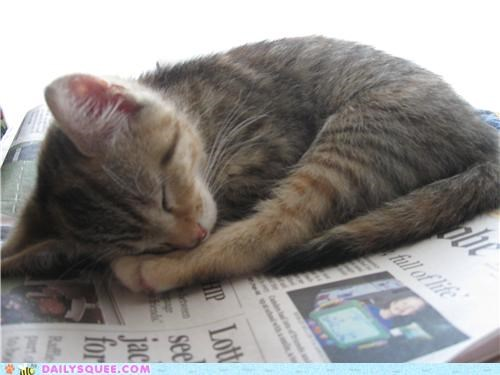 asleep,baby,cat,crank,do not disturb,kitten,reader squees,sleeping,sleepy,warning