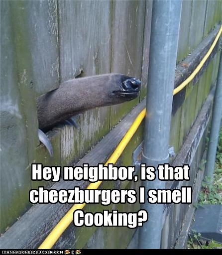 Cheezburger Image 4784113408