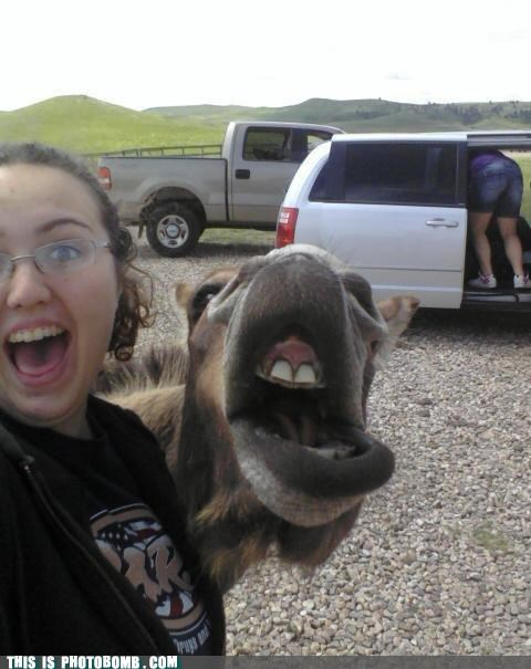 animal Animal Bomb bomb butt camel - 4784252416