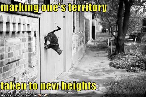 caption,captioned,cat,heights,marking,new,pun,territory