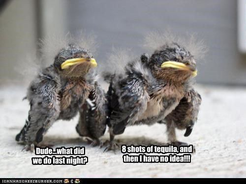 8 Babies baby bird birds cant caption captioned confused drunk hungover last night night remember shots tequila - 4784550400