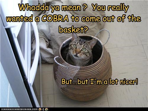 Whadda ya mean ? You really wanted a COBRA to come out of the basket? But...but I'm a lot nicer!