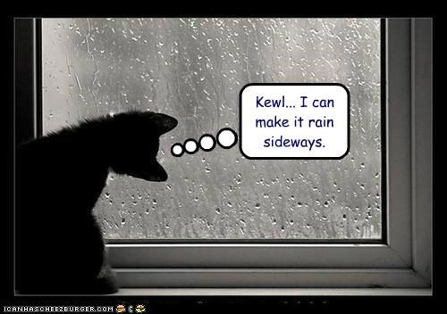 caption,captioned,cat,cool,kitten,make,perspective,rain,sideways,tilting