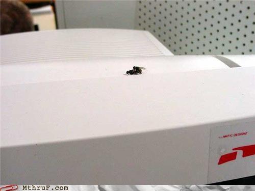 computer dating flies sex - 4785209600