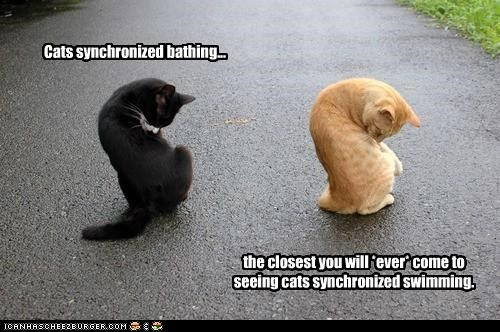 bathing caption captioned cat Cats closest ever swimming synchronized - 4785543168