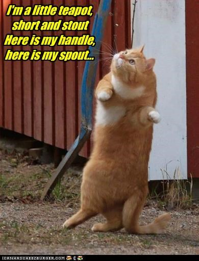 best of the week caption captioned cat dance dancing handle little teapot rhyme short singing song spout stout tabby
