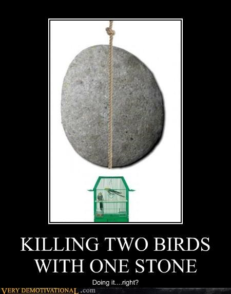 adage birds hilarious rock stone - 4786198528