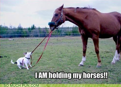 Command,double meaning,hold your horses,holding,horses,joke,literalism,misinterpretation