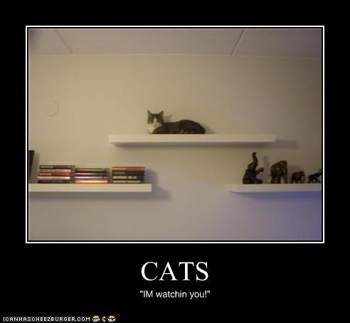 "CATS ""IM watchin you!"""