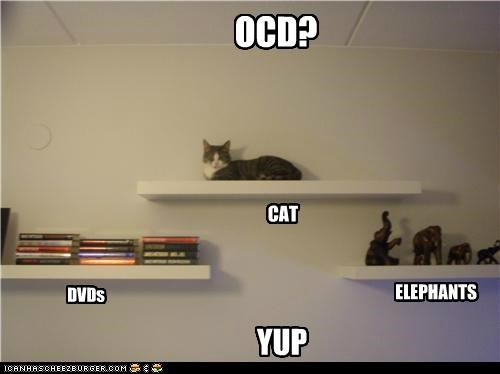 OCD? DVDs CAT ELEPHANTS YUP