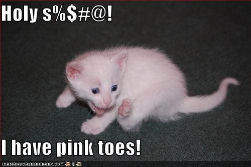 amazed best of the week caption captioned cat kitten pink realization surprised toes - 4787289088