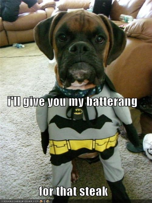 baterang,batman,boxer,costume,do want,dressed up,noms,offer,puppy,steak,trade