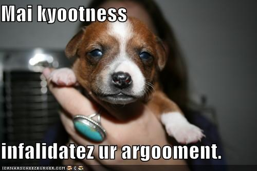 argument cuteness invalid invalidating puppy whatbreed - 4787455232