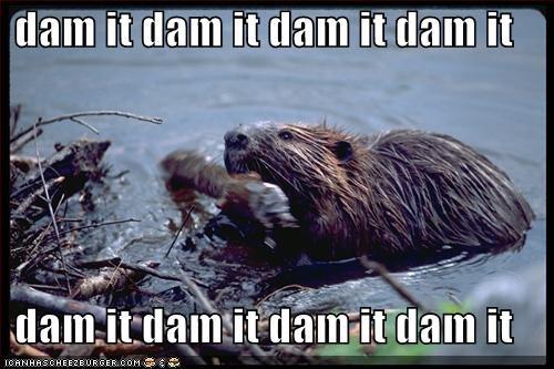 beavers,dams,water