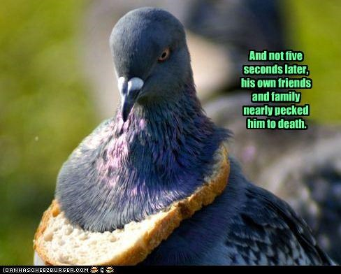 bread,caption,captioned,Death,family,five,friends,later,nearly,necklace,pecked,pigeon,seconds