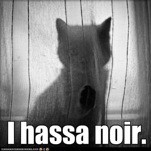 caption captioned cat curtain i has kitten noir - 4787755264