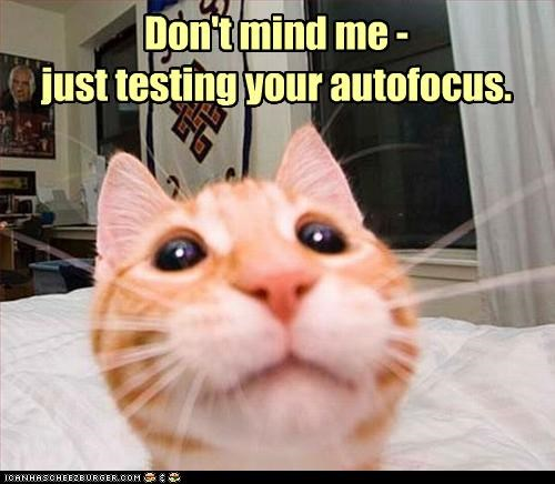 autofocus,caption,captioned,cat,closeup,dont,focus,me,mind,tabby,testing