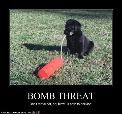 BOMB THREAT Don't move cat, or i blow us both to oblivion!