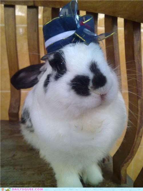 bunny rabbit reader squees remembering rip - 4789005568