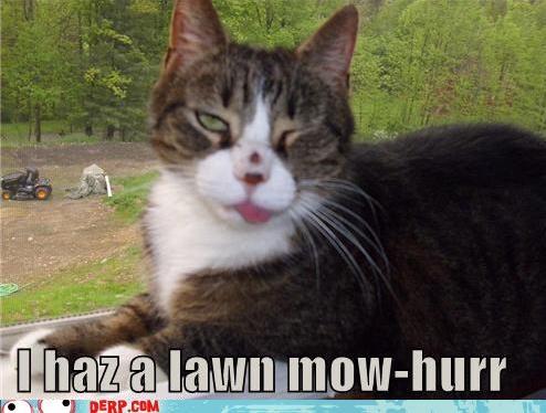 critters,i haz,kitteh,lawn mower