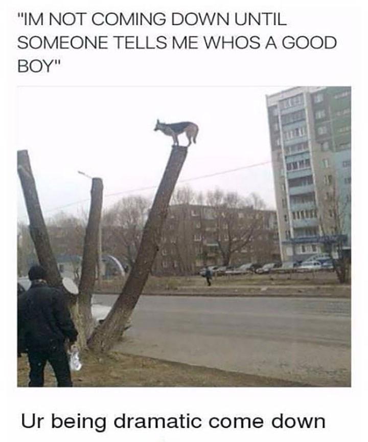 dog memes - funny dog memes