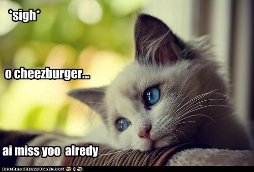 Cheezburger Image 4789609984