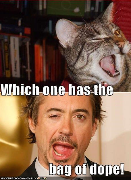 Celebriderp,dope,kitteh,robert downey jr,weed