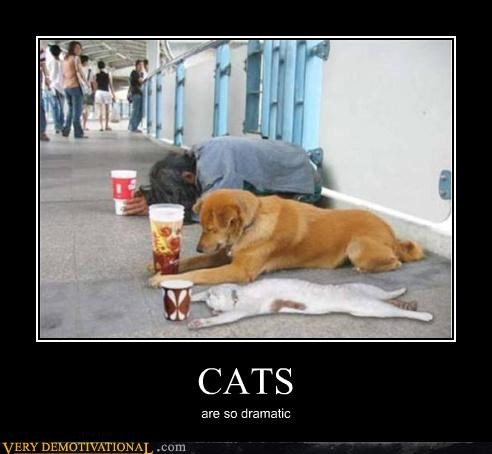 Cats change dogs hilarious homeless - 4790668032