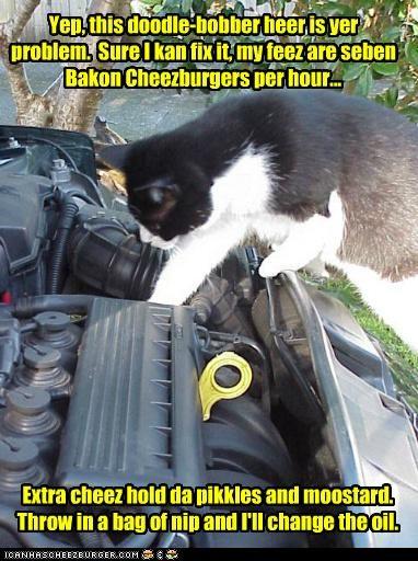 Cheezburger Image 4791342592