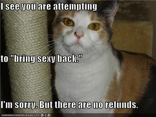 attempting back bring caption captioned cat no refunds see sexy sorry you - 4791512576