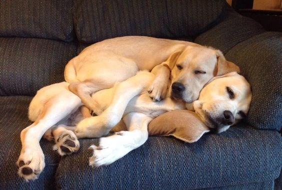 dogs cuddling up in couples for valentine's day