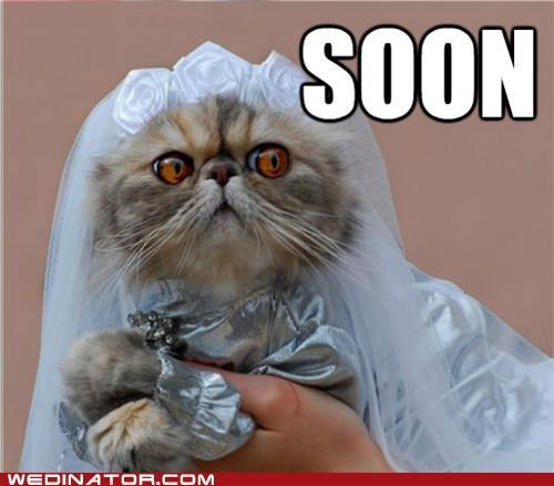 animals bride Cats funny wedding photos Hall of Fame - 4791657728