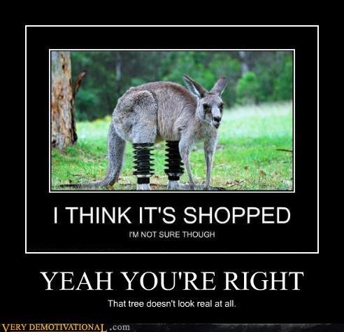 hilarious kangaroo photoshop real - 4791660032