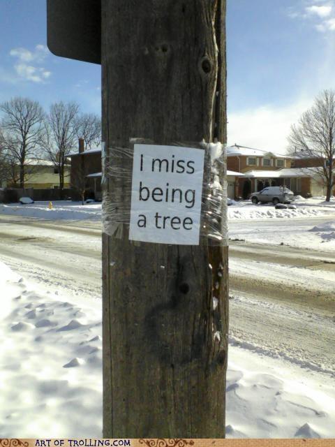 IRL pole Sad tree - 4791795712