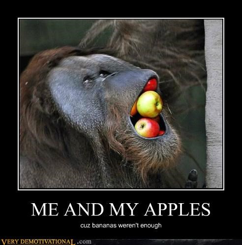animals,apples,bananas,hilarious,mouthful,orangutan,wtf