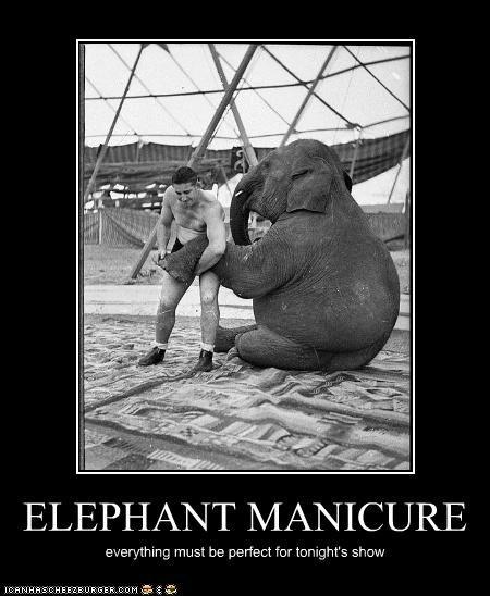 animal demotivational elephant funny Photo wtf - 4792051200