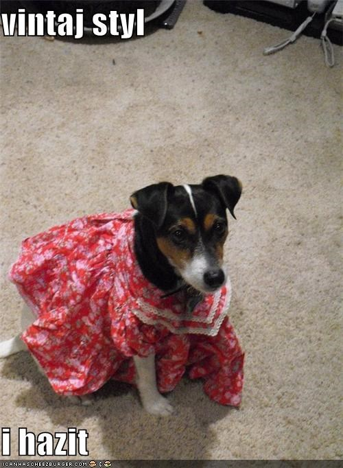 clothing costume dress mixed breed rat terrier style vintage - 4792189440