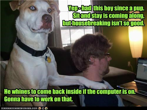 Yep - had this boy since a pup. Sit and stay is coming along, but housebreaking isn't so good. He whines to come back inside if the computer is on. Gonna have to work on that.